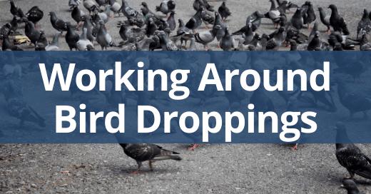 Working Around Bird Droppings Safety Talk